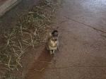 Waylon the barn cat