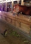 Cat&Rosco