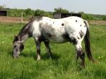 Horseinpasture