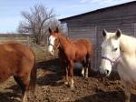 Horsesgrouping