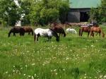Horsesinpasture17