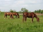 Horsesinpasture2